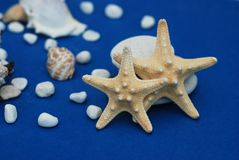 Nautical, Marrine concept. Starfish with Shell against a Blue background with copy Space. Summer Holliday. Nautical, Marrine concept. Starfish with Shell royalty free stock photography
