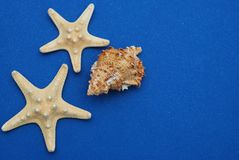 Nautical, Marrine concept. Starfish with Shell against a Blue background with copy Space. Summer Holliday. Nautical, Marrine concept. Starfish with Shell royalty free stock images