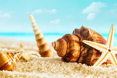 Nautical still life with seashells and starfish Royalty Free Stock Image