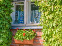 Nautical style window and flowers Royalty Free Stock Image