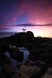 Isolated tree during sunset Labuan Island Royalty Free Stock Photos