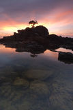 Isolated tree bonsai Nautical Twillight Labuan Island II Stock Photo