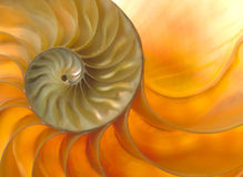 Nautilaus shell Stock Images