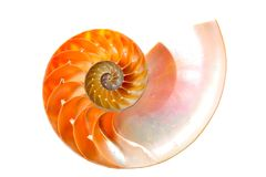 Nautilue shell section Royalty Free Stock Photo