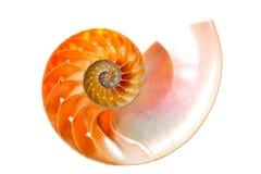 Nautilue shell section. Nautilus shell section isolated on white Royalty Free Stock Photo
