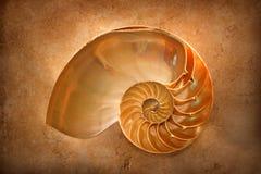 Nautilus à temperatura ambiente Fotos de Stock Royalty Free