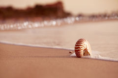 Nautilus θαλασσινών κοχυλιών στην παραλία θάλασσας με τα κύματα κάτω από τον ήλιο ανατολής ligh Στοκ Εικόνα