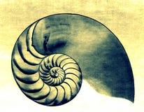 Nautilus ΙΙ Στοκ Εικόνες