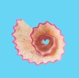 Nautilus μολυβιών Στοκ φωτογραφία με δικαίωμα ελεύθερης χρήσης