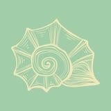 Nautilus раковины моря Мягкая иллюстрация года сбора винограда цвета Стоковые Изображения