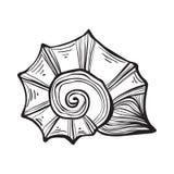 Nautilus раковины моря Черная иллюстрация года сбора винограда гравировки Стоковое Изображение