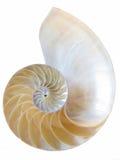 nautilus Arkivbild