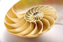 κοχύλι nautilus Στοκ Εικόνες