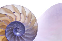 Nautilus Fotografia Stock