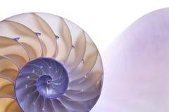 Nautilus Foto de archivo