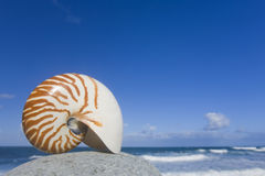 Nautilus Royalty Free Stock Photography