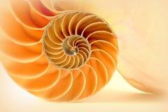 Nautilus Photo libre de droits
