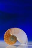 Nautilus Стоковые Фотографии RF