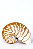 Nautilus Royalty Free Stock Photo