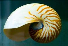 Nautilus fotografia de stock