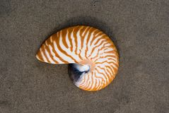 Nautilus. A Nautilus shell on the beach.   The nautilus shell presents one of the finest natural examples of a logarithmic spiral Royalty Free Stock Photography