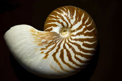 Nautilus Stock Photos
