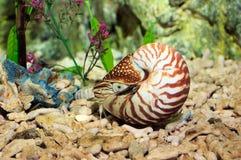 Nautilus stock fotografie