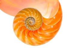 Nautilus. Shell section against white Stock Photo