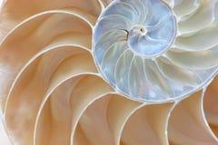 половинная раковина nautilus Стоковые Изображения