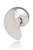 Nautilus aljofarado Imágenes de archivo libres de regalías