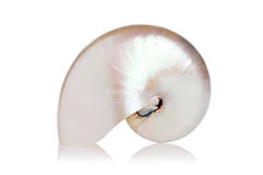 Nautilus aljofarado Imagenes de archivo