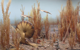 Nautilus and belemnites in the ancient seas Royalty Free Stock Images