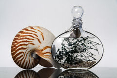 Nautilus And Bottle. Image of nautilus an bottle Royalty Free Stock Image