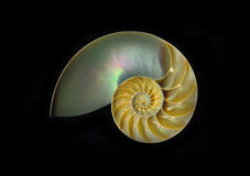 Nautilus 'chambré' Imagen de archivo libre de regalías