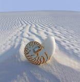 Nautilus 'chambré' (nautilus Fotografía de archivo