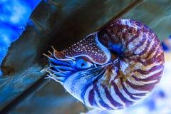 Nautilus Stock Image
