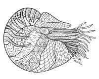 Nautilus com detalhes altos Fotografia de Stock