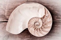 Nautilus compartimentado Imagen de archivo libre de regalías