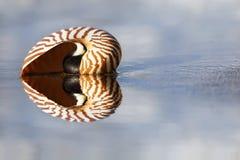 Nautilus da praia foto de stock