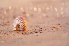 Nautilus de coquillage sur la plage de mer avec des vagues sous le ligh du soleil de lever de soleil Photographie stock libre de droits