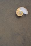 Nautilus do Bellybutton (macromphalus do nautilus) Imagem de Stock