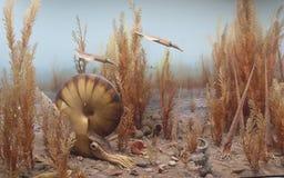 Nautilus en belemniet in het oude overzees Royalty-vrije Stock Afbeeldingen