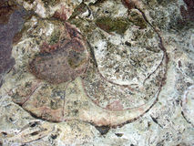 Nautilus fossil. Of the Paleocene epoch, Cenozoic era. Argentina Closeup Stock Image