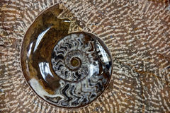 Nautilus fossil in stone Stock Images