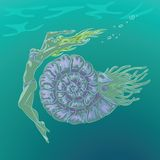 Nautilus royalty free illustration