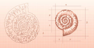 Nautilus graphic Stock Images