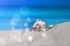 Nautilus. Macro shot chambered nautilus on the beach in front of an azure sea with sunspots Stock Image