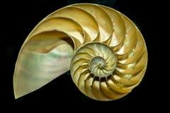 Nautilus-Meer im Schnitt Shell Lizenzfreie Stockfotos