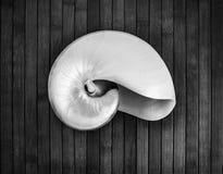 Nautilus. Stock Photo