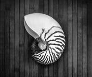 Nautilus. Stock Photography